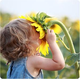photo-sunflower.jpg